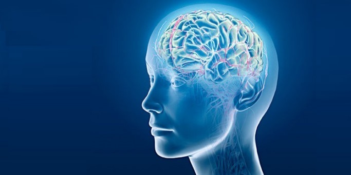 brain-banner
