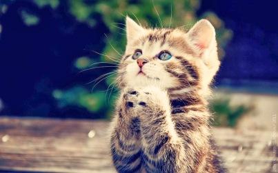 prayering-image