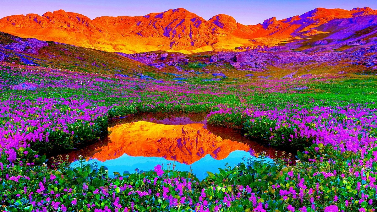 Brilliant Colors Of Nature HD Desktop Background